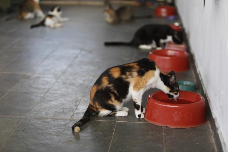 No Brasil, praticar maus-tratos contra animais é crime, com punição de três meses a um ano de prisão e multa. - Foto: Luciano Carcará / Ag. A Tarde