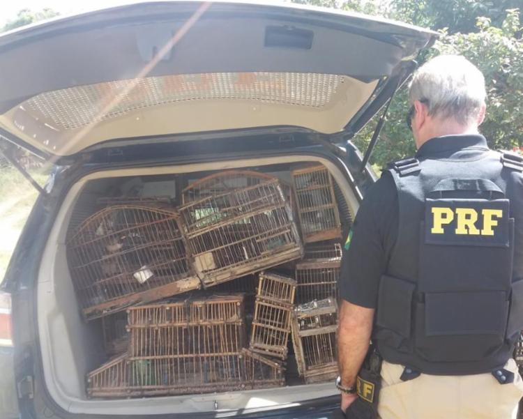 Cinquenta e seis animais silvestres foram resgatados na ação - Foto: Divulgação | PRF-BA