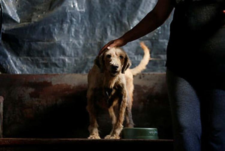 Para justiça de São Paulo, Vara de Família pode decidir sobre guarda compartilhada de animais - Foto: Luciano Carcará | Ag. A Tarde