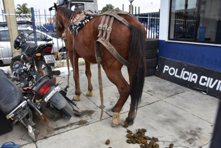Animal será levado para a prefeitura para ser usado em alguma utilidade pública - Foto: Reprodução | Blog do Anderson