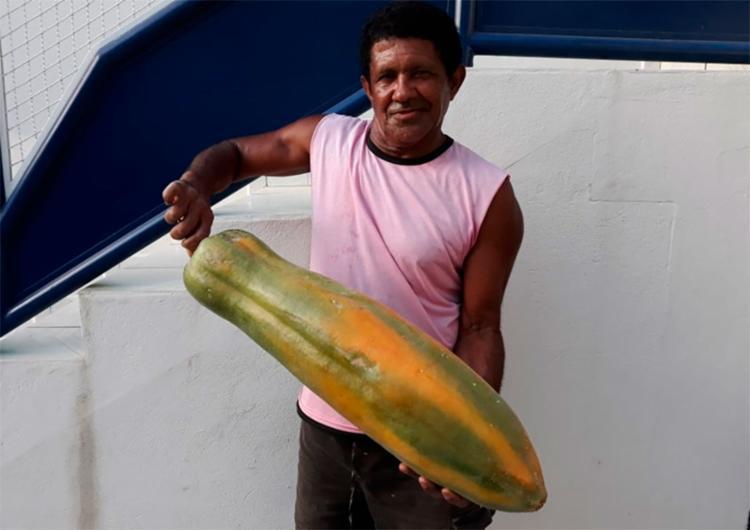 Edmundo Assis Rocha exibe mamão de 60 centímetros - Foto: Patrick Cassiano | Reprodução | Blog Regional
