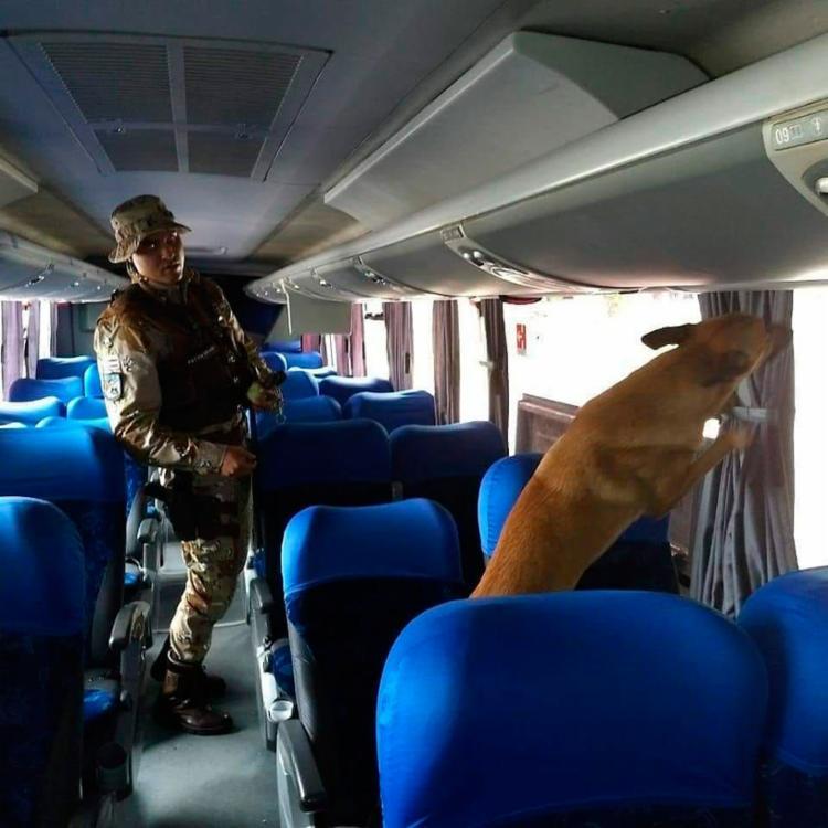 Policiais utilizaram um cão para ajudar na abordagem
