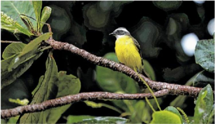 FLORESTA SOBREVIVENTE - Bioma da faixa litorânea brasileira - Foto: Raul Spinassé | Ag. A TARDE