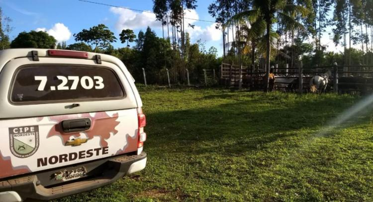 Gado foi encontrado em fazenda a 205 km do local do crime - Foto: Divulgação | SSP