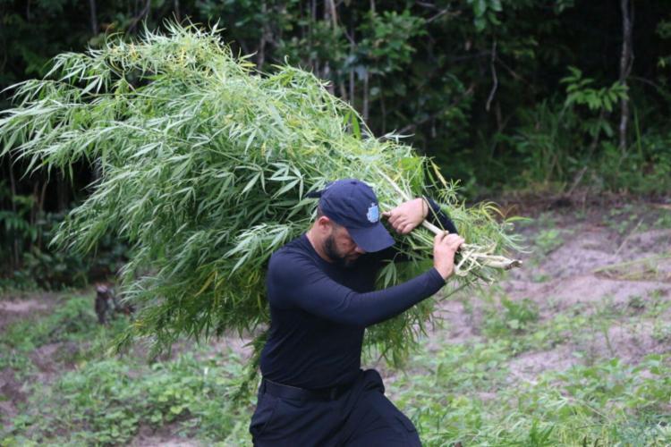 Polícia apreendeu 1,5 tonelada de maconha em Esplanada - Foto: Alberto Maraux | SSP-BA