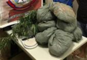 Jovens são presos com 11 kg de maconha enterrados no quintal de casa | Foto: Reprodução | SSP