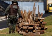 Ação apreende 27 fogueiras de madeira ilegal na Bahia | Raul Spinassé l Ag. A TARDE
