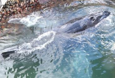 Animal está ferido e não consegue deixar o local - Washington Silva | DCS/PMBA