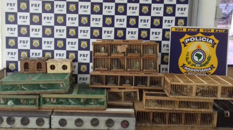 Foram encontrados dentro veículo 15 gaiolas com 222 aves vivas e seis mortas - Foto: Divulgação   PRF