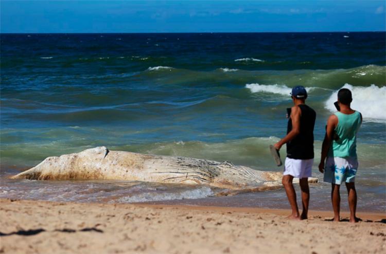 O mau cheiro e o tamanho da baleia chamam a atenção