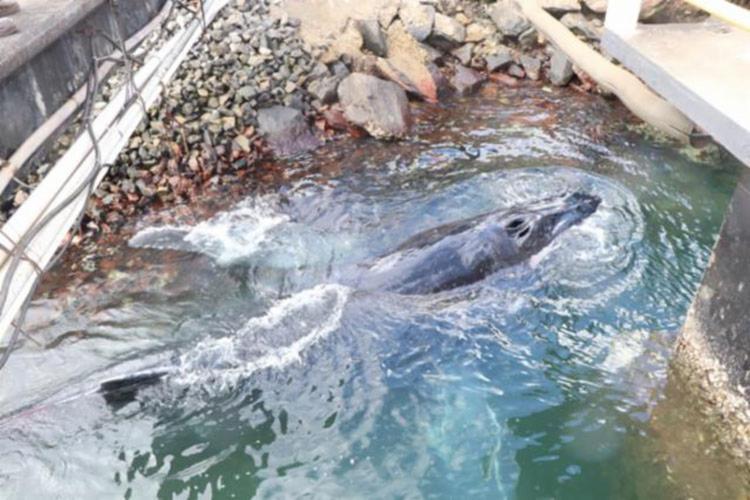 Baleia se machucou no local enquanto tentava sair - Foto: Cidadão Reporter