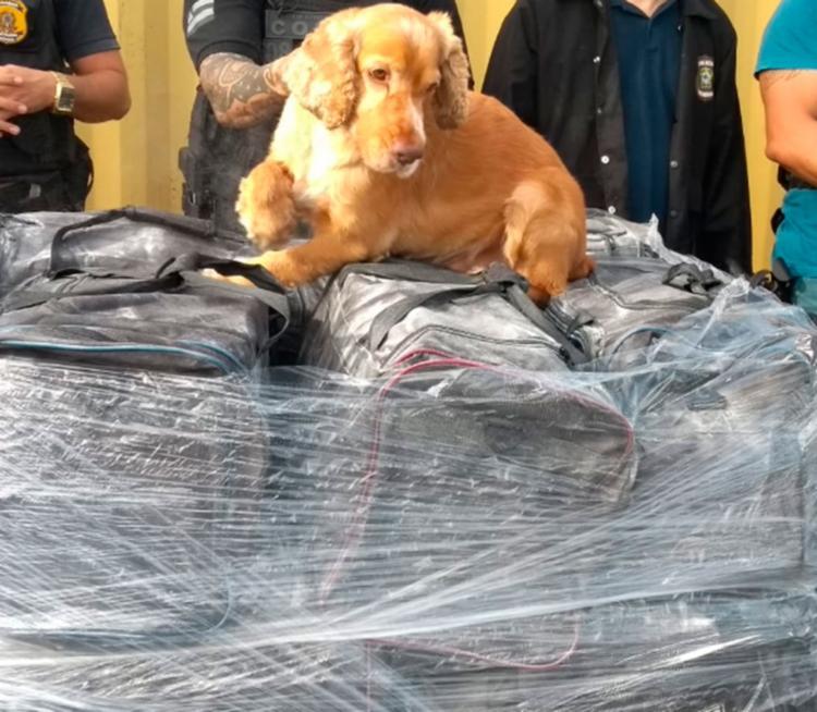 Cães farejadores da Polícia Civil ajudaram na localização do material