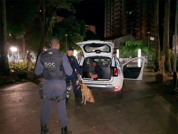 Cadela atrapalhou a fuga de um dos homens que tentava roubar os fios - Foto: Divulgação | GCM