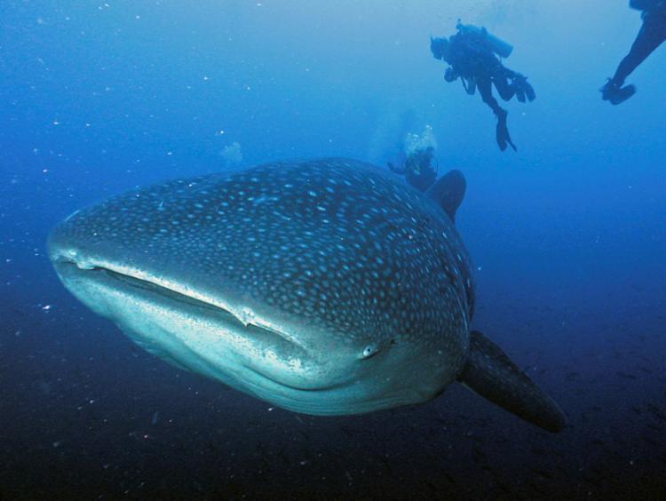 As ilhas são também um ponto internacional de mergulho - Foto: Divulgação