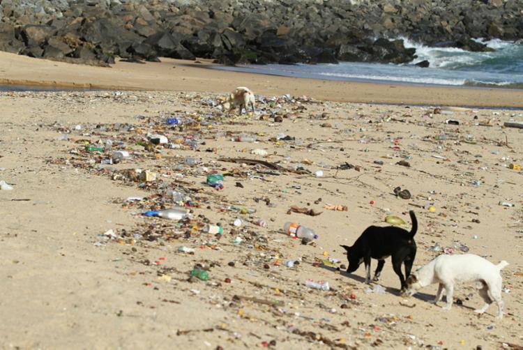 Em Salvador e RMS é comum encontrar dejetos perto de praias, rios, canais e bueiros - Foto: Tiago Caldas | Ag. A TARDE | 21.06.2018