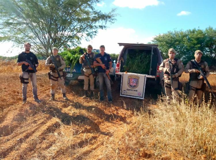 Policiais afirmam que região é muito utilizada para o cultivo de maconha