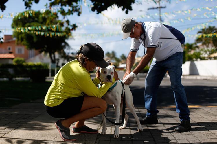 Agente de endemias realiza vacinação antirrábica em cães e gatos domésticos no condomínio Jardim Piatã - Foto: Raul Spinassé l Ag. A TARDE