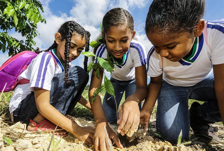 Comunidades plantam mudas no Anel Florestal para celebrar o Meio Ambiente