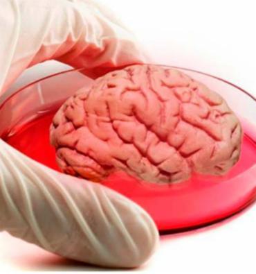 Minicérebros são produzidos com o material genético do homem de Neanderthal - Foto: Reprodução | Facebook