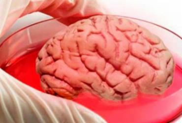 Cientista brasileiro cria minicérebro com gene de Neanderthal | Reprodução | Facebook