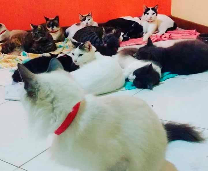 Alguns dos 31 gatos de Adriana