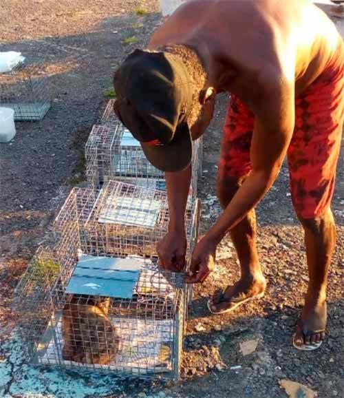 O projeto Sotero Bichanos captura e castra gatos de rua
