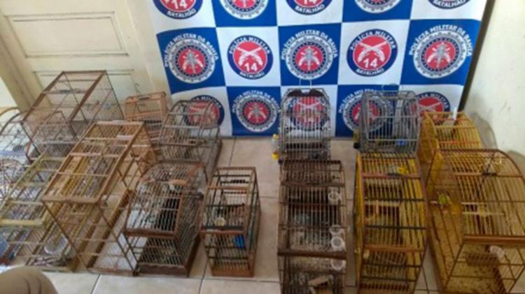 Animais foram localizados na casa dos suspeitos - Foto: Reprodução | Portal Jaguaripe