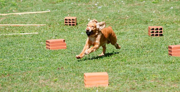 Rotina é intensa, exigindo esforço dos cães de atuação