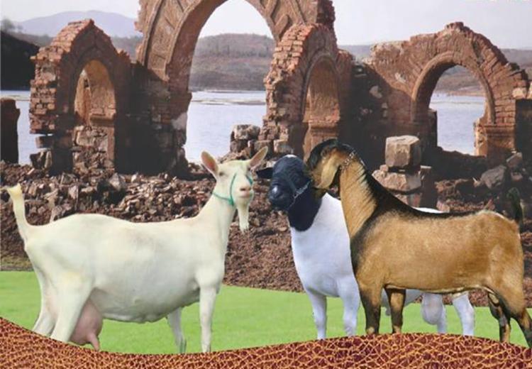 A EXPOCANUDOS incentiva as ações de comércio e turismo regional, valorizando os produtores rurais e pequenos agricultores - Foto: Divulgação