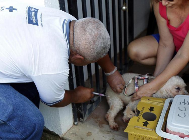 Expectativa é que cerca de 200 mil animais sejam vacinados - Foto: Bruno Concha l Secom