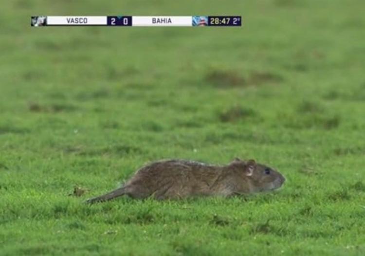 Rato foi flagrado após invadir o campo no segundo tempo de jogo - Foto: Reprodução