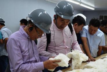 Bahia recebe compradores internacionais de algodão