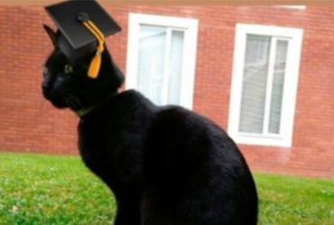 O gato Rolf ficou tão popular que ganhou um perfil no Twitter e um diploma de aluno honorário da universidade - Reprodução | Twitter