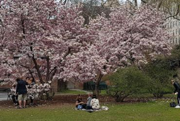 O que fazer em Nova York durante a primavera   Carlos Morais   Ag. A TARDE