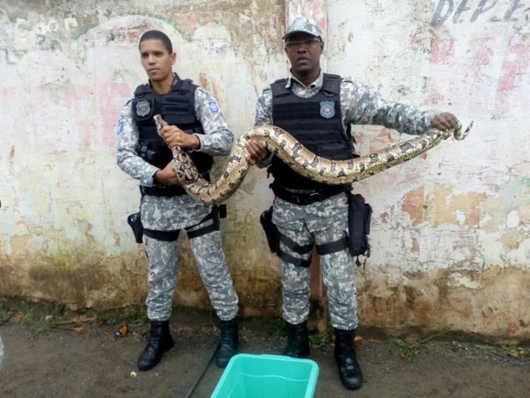 Do total de animais resgatados, 124 foram cobras - Foto: Divulgação | Gepa