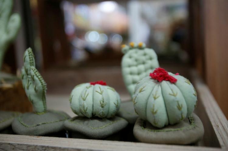 Além das comidinhas, há mandacarus e outros tipos de cactos à venda para decoração