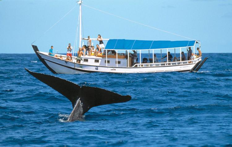 Cruzeiro de observação das baleias é uma das atividades da programação - Foto: Divulgação | Instituto Baleia Jubarte