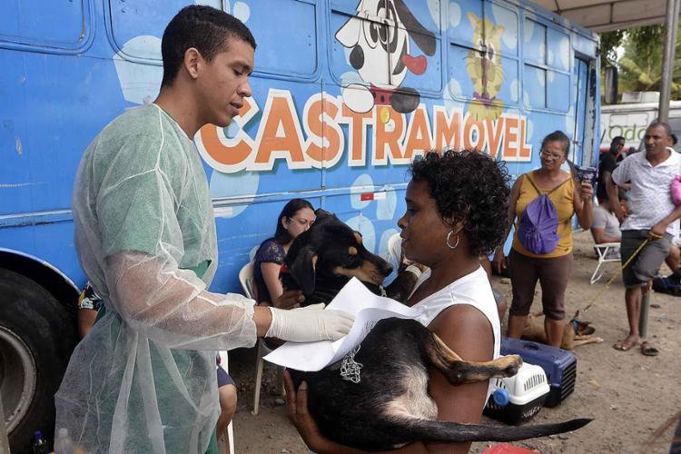O serviço itinerante completou 30 mil castrações de cães e gatos este mês - Foto: Divulgação l Secom-PMS