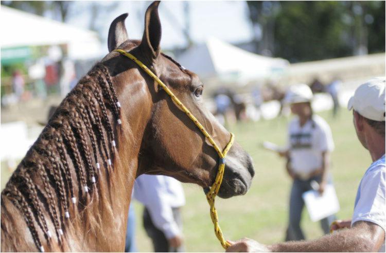 A feira agropecuária abre as portas próximo domingo,12, mas abertura oficial acontece com cavalgada do Jardim de Alah ao Parque de Exposições no sábado, 11 - Foto: Divulgação