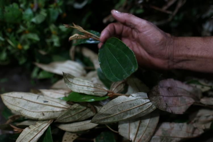 Na Sete Portas, a barraca Gato do Acaçá vende folhas medicinais e ritualísticas