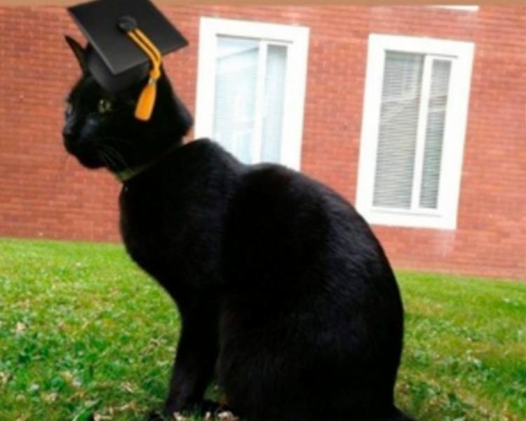 O gato Rolf ficou tão popular que ganhou um perfil no Twitter e um diploma de aluno honorário da universidade - Foto: Reprodução | Twitter