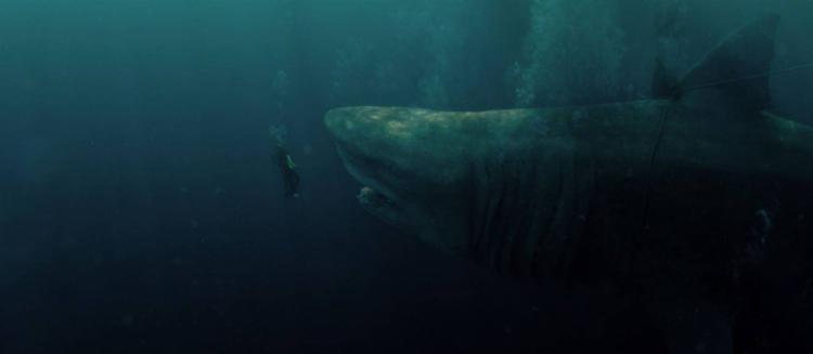 Megalodonte do filme é cinco vezes maior que um tubarão branco - Foto: Divulgação