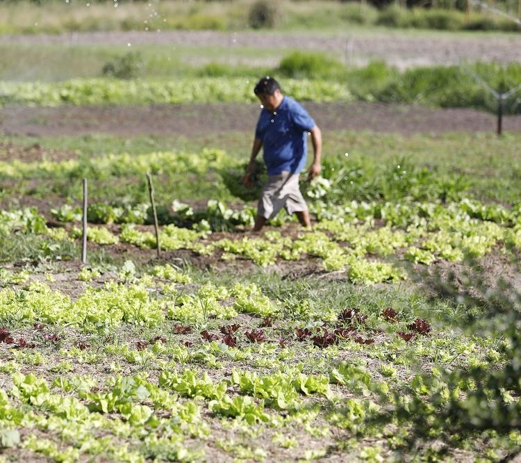 Carlos Hideyasu Nishiyama, agricultor, em sua propriedade na zona rural em Mata de São João