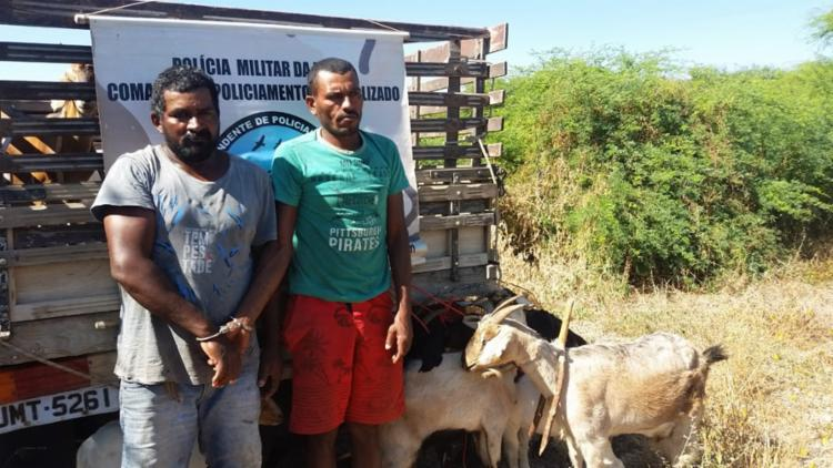 17 animais furtados foram encontrados com os ladrões