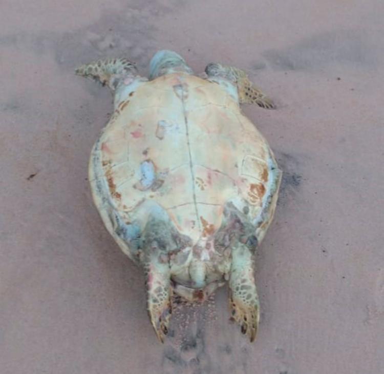 Animal morto aparenta ser da espécie