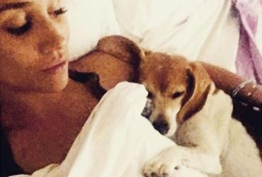 Cão adotado por Meghan Markle ganhará duas biografias | Reprodução