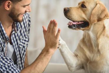 Pacientes do SUS poderão receber a visita dos seus animais de estimação