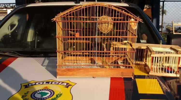 Entre os pássaros estavam espécies conhecidas como azulão, coleira e papa-capim - Foto: Divulgação | PRF