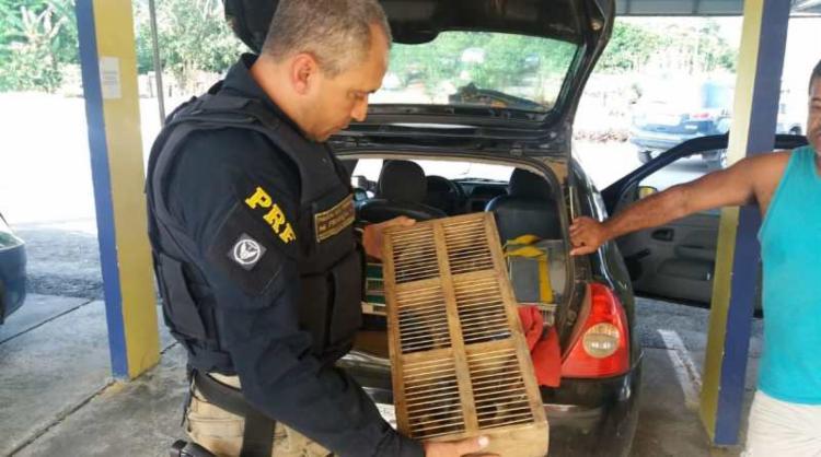 O veículo e os animais foram encaminhados para o órgão ambiental - Foto: Divulgação | PRF-BA