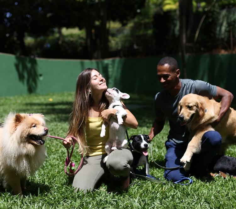 Paraíso canino: Ana e Magno hospedam e adestram os bichinhos em uma creche para cachorros